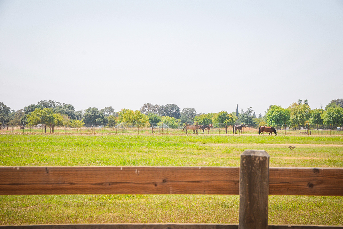 Horse Property at Gibson Ranch